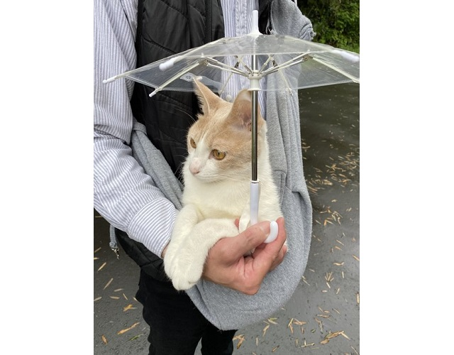 Japanese cat enjoys walks in the rain with his adorable tiny umbrella【Photos】