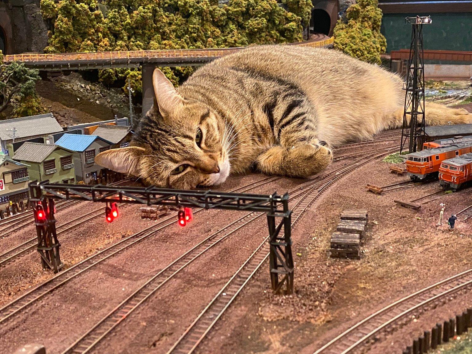 Giant Cat Takes Nap on Railroad Tracks