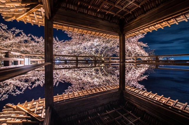 What's going on in this brain-breakingly beautiful cherry blossom temple photo?