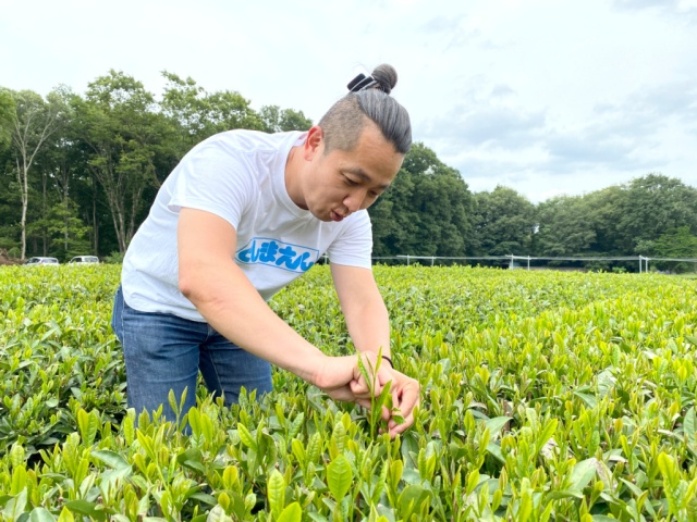 From tea field to teacup: How do you make green tea from freshly picked tea leaves?