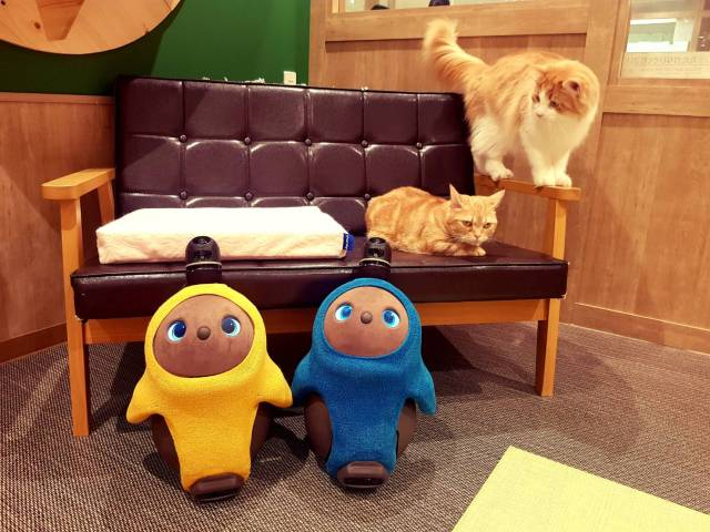 Now you can cuddle both cats and lovable robots at new Lovot store in a Kawasaki pet store
