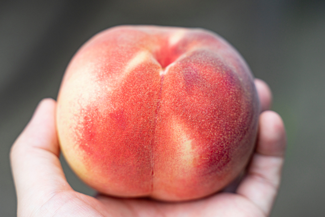 Fukushima peaches: Worthy of the praise given to them by foreign Olympics teams?