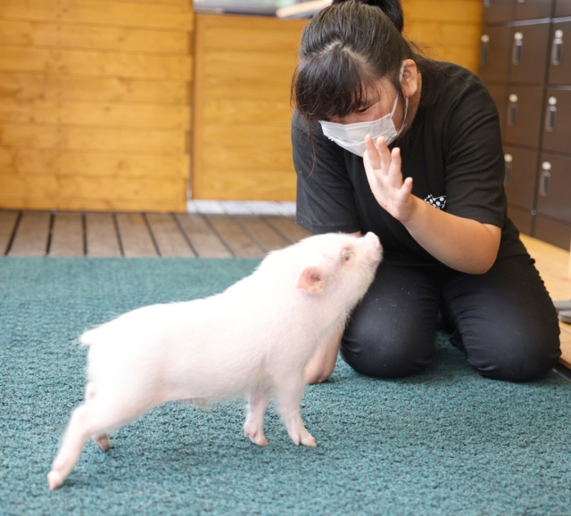 Tokyo's newest micro pig petting zoo and cafe doubles as a community outreach center