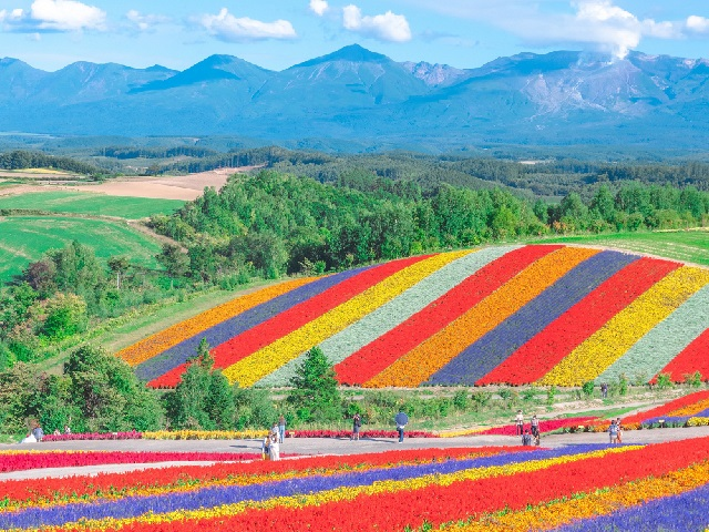 Flower park in northern Japan looks too beautiful to be real, but this happens every year【Photos】