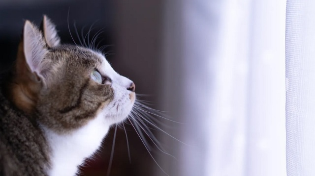 Cat owner who sold car to pay for pet's treatment gets huge surprise from world's best buyer