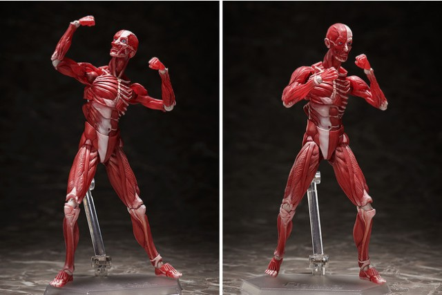 Figma creates realistic action figure of the inner human anatomy that's fully posable