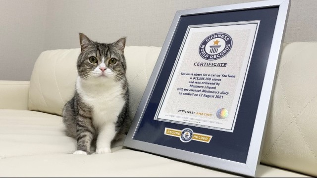 Japanese Scottish Fold Motimaru grabs Guinness World Record for most watched cat on YouTube