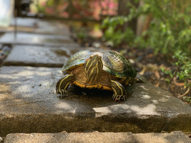 Flight out of Narita Airport delayed because of a turtle on the runway